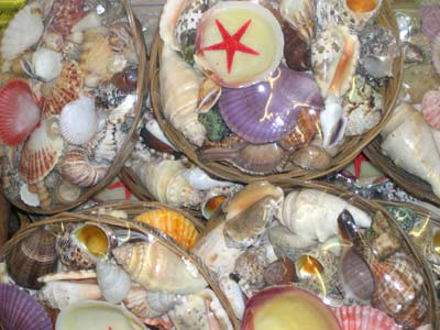 Shell Basket with Starfish