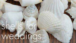 Wedding seashells